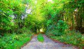 Trail Walk PIERREFONDS - en forêt de Compiègne_7_Mont St-Pierre_Mont Arcy_étangs de St-Pierre - Photo 133