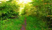 Trail Walk PIERREFONDS - en forêt de Compiègne_7_Mont St-Pierre_Mont Arcy_étangs de St-Pierre - Photo 95