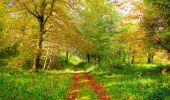 Trail Walk PIERREFONDS - en forêt de Compiègne_7_Mont St-Pierre_Mont Arcy_étangs de St-Pierre - Photo 49