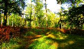 Trail Walk PIERREFONDS - en forêt de Compiègne_7_Mont St-Pierre_Mont Arcy_étangs de St-Pierre - Photo 73