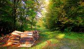 Trail Walk PIERREFONDS - en forêt de Compiègne_7_Mont St-Pierre_Mont Arcy_étangs de St-Pierre - Photo 16