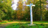 Trail Walk PIERREFONDS - en forêt de Compiègne_7_Mont St-Pierre_Mont Arcy_étangs de St-Pierre - Photo 15