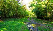 Trail Walk PIERREFONDS - en forêt de Compiègne_7_Mont St-Pierre_Mont Arcy_étangs de St-Pierre - Photo 131