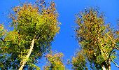 Trail Walk PIERREFONDS - en forêt de Compiègne_7_Mont St-Pierre_Mont Arcy_étangs de St-Pierre - Photo 105