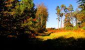 Trail Walk PIERREFONDS - en forêt de Compiègne_7_Mont St-Pierre_Mont Arcy_étangs de St-Pierre - Photo 129