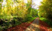 Trail Walk PIERREFONDS - en forêt de Compiègne_7_Mont St-Pierre_Mont Arcy_étangs de St-Pierre - Photo 44