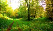 Trail Walk PIERREFONDS - en forêt de Compiègne_7_Mont St-Pierre_Mont Arcy_étangs de St-Pierre - Photo 47