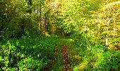 Trail Walk PIERREFONDS - en forêt de Compiègne_7_Mont St-Pierre_Mont Arcy_étangs de St-Pierre - Photo 46
