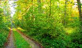 Trail Walk PIERREFONDS - en forêt de Compiègne_7_Mont St-Pierre_Mont Arcy_étangs de St-Pierre - Photo 18