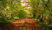 Trail Walk PIERREFONDS - en forêt de Compiègne_7_Mont St-Pierre_Mont Arcy_étangs de St-Pierre - Photo 119