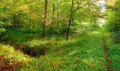 Trail Walk PIERREFONDS - en forêt de Compiègne_7_Mont St-Pierre_Mont Arcy_étangs de St-Pierre - Photo 50