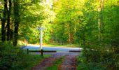Trail Walk PIERREFONDS - en forêt de Compiègne_7_Mont St-Pierre_Mont Arcy_étangs de St-Pierre - Photo 27