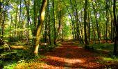 Trail Walk PIERREFONDS - en forêt de Compiègne_7_Mont St-Pierre_Mont Arcy_étangs de St-Pierre - Photo 78