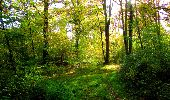 Trail Walk PIERREFONDS - en forêt de Compiègne_7_Mont St-Pierre_Mont Arcy_étangs de St-Pierre - Photo 41