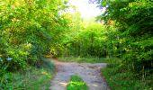 Trail Walk PIERREFONDS - en forêt de Compiègne_7_Mont St-Pierre_Mont Arcy_étangs de St-Pierre - Photo 132