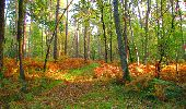 Trail Walk PIERREFONDS - en forêt de Compiègne_7_Mont St-Pierre_Mont Arcy_étangs de St-Pierre - Photo 8