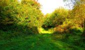 Trail Walk PIERREFONDS - en forêt de Compiègne_7_Mont St-Pierre_Mont Arcy_étangs de St-Pierre - Photo 57