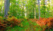 Trail Walk PIERREFONDS - en forêt de Compiègne_7_Mont St-Pierre_Mont Arcy_étangs de St-Pierre - Photo 32