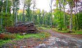 Trail Walk PIERREFONDS - en forêt de Compiègne_7_Mont St-Pierre_Mont Arcy_étangs de St-Pierre - Photo 146