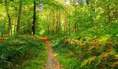 Trail Walk PIERREFONDS - en forêt de Compiègne_7_Mont St-Pierre_Mont Arcy_étangs de St-Pierre - Photo 89