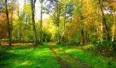 Trail Walk PIERREFONDS - en forêt de Compiègne_7_Mont St-Pierre_Mont Arcy_étangs de St-Pierre - Photo 37