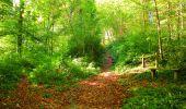 Trail Walk PIERREFONDS - en forêt de Compiègne_7_Mont St-Pierre_Mont Arcy_étangs de St-Pierre - Photo 91