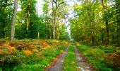 Trail Walk PIERREFONDS - en forêt de Compiègne_7_Mont St-Pierre_Mont Arcy_étangs de St-Pierre - Photo 21