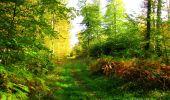Trail Walk PIERREFONDS - en forêt de Compiègne_7_Mont St-Pierre_Mont Arcy_étangs de St-Pierre - Photo 53