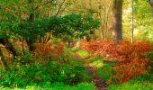 Trail Walk PIERREFONDS - en forêt de Compiègne_7_Mont St-Pierre_Mont Arcy_étangs de St-Pierre - Photo 61