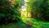 Trail Walk PIERREFONDS - en forêt de Compiègne_7_Mont St-Pierre_Mont Arcy_étangs de St-Pierre - Photo 55