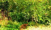 Trail Walk PIERREFONDS - en forêt de Compiègne_7_Mont St-Pierre_Mont Arcy_étangs de St-Pierre - Photo 96