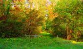 Trail Walk PIERREFONDS - en forêt de Compiègne_7_Mont St-Pierre_Mont Arcy_étangs de St-Pierre - Photo 39