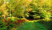 Trail Walk PIERREFONDS - en forêt de Compiègne_7_Mont St-Pierre_Mont Arcy_étangs de St-Pierre - Photo 35