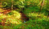Trail Walk PIERREFONDS - en forêt de Compiègne_7_Mont St-Pierre_Mont Arcy_étangs de St-Pierre - Photo 51