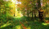 Trail Walk PIERREFONDS - en forêt de Compiègne_7_Mont St-Pierre_Mont Arcy_étangs de St-Pierre - Photo 48