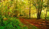 Trail Walk PIERREFONDS - en forêt de Compiègne_7_Mont St-Pierre_Mont Arcy_étangs de St-Pierre - Photo 42