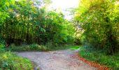 Trail Walk PIERREFONDS - en forêt de Compiègne_7_Mont St-Pierre_Mont Arcy_étangs de St-Pierre - Photo 134