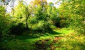 Trail Walk PIERREFONDS - en forêt de Compiègne_7_Mont St-Pierre_Mont Arcy_étangs de St-Pierre - Photo 94