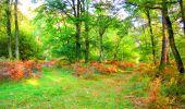Trail Walk PIERREFONDS - en forêt de Compiègne_7_Mont St-Pierre_Mont Arcy_étangs de St-Pierre - Photo 9