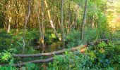 Trail Walk PIERREFONDS - en forêt de Compiègne_7_Mont St-Pierre_Mont Arcy_étangs de St-Pierre - Photo 69