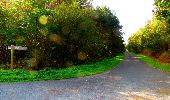 Trail Walk PIERREFONDS - en forêt de Compiègne_7_Mont St-Pierre_Mont Arcy_étangs de St-Pierre - Photo 62