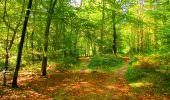 Trail Walk PIERREFONDS - en forêt de Compiègne_7_Mont St-Pierre_Mont Arcy_étangs de St-Pierre - Photo 88