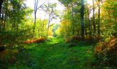 Trail Walk PIERREFONDS - en forêt de Compiègne_7_Mont St-Pierre_Mont Arcy_étangs de St-Pierre - Photo 52
