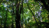 Trail Walk PIERREFONDS - en forêt de Compiègne_7_Mont St-Pierre_Mont Arcy_étangs de St-Pierre - Photo 153