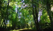 Trail Walk PIERREFONDS - en forêt de Compiègne_7_Mont St-Pierre_Mont Arcy_étangs de St-Pierre - Photo 154