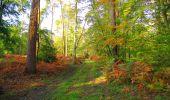 Trail Walk PIERREFONDS - en forêt de Compiègne_7_Mont St-Pierre_Mont Arcy_étangs de St-Pierre - Photo 12