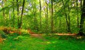 Trail Walk PIERREFONDS - en forêt de Compiègne_7_Mont St-Pierre_Mont Arcy_étangs de St-Pierre - Photo 75