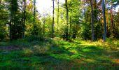 Trail Walk PIERREFONDS - en forêt de Compiègne_7_Mont St-Pierre_Mont Arcy_étangs de St-Pierre - Photo 126