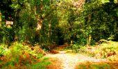 Randonnée Marche CORCY - en forêt de Retz_58_le bois de Hautwison - Photo 47