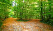 Randonnée Marche CORCY - en forêt de Retz_58_le bois de Hautwison - Photo 68